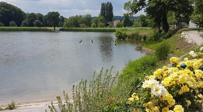 Schlossteich Sitzenberg Blumen