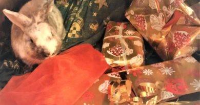 Weihnachtsgeschenke, Hasi